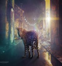 Waptrick Night Leopard
